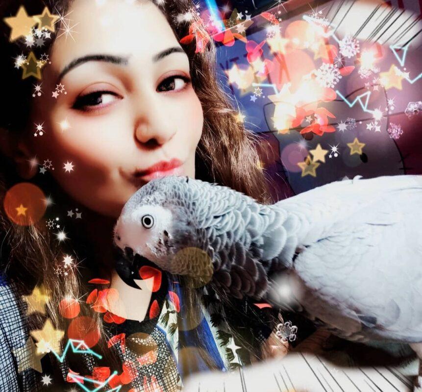 parrot reveiws